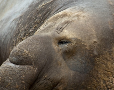 http://bnelsonphotos.com/gallery/41/thumbs/1-Seal%20Dreams%20700.jpg