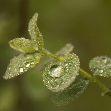 http://bnelsonphotos.com/gallery/41/thumbs/Raindrops%20on%20Poison%20Oak.jpg